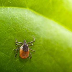 Lyme-Disease-Treatment-Program